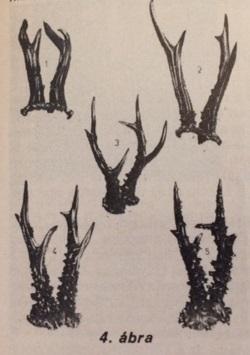 Az őzagancs bírálata (Nimród, 1978. augusztus)