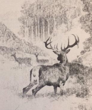 Metszéspontok (Nimród, 1978. szeptember)