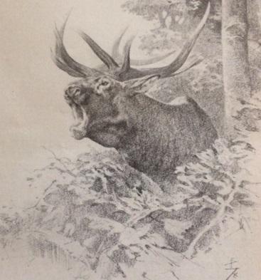 Az oroszlánhangú bika (Nimród, 1978. október)