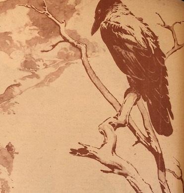 Az öreg szürke (Nimród, 1978. karácsonyi különszám)