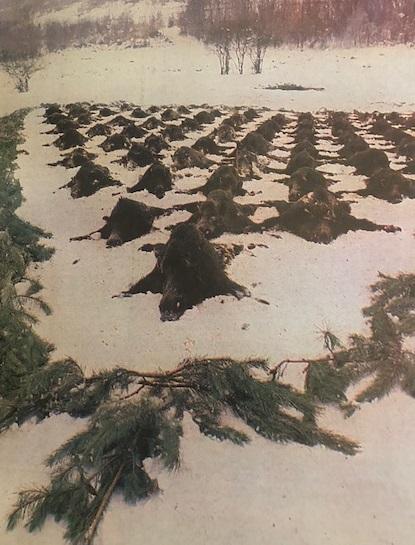 Végtisztesség (Nimród, 1983. január)