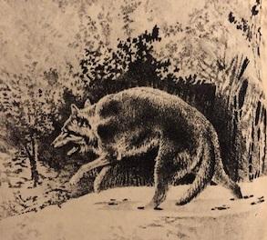 Lupi (Nimród, 1983. március)