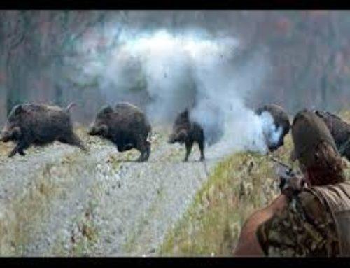 Vaddisznó vadászat : Top 10